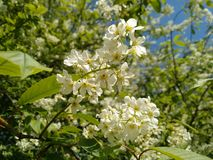 цветки весной Солнце Стоковая Фотография RF