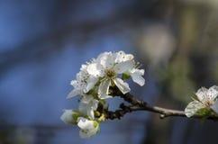 Цветки весной Стоковые Изображения RF