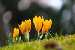 Цветки весной Стоковое Фото