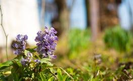 Цветки весной Стоковая Фотография RF