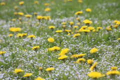 Цветки весны в горах Стоковая Фотография