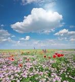 Цветки весны в луге Стоковые Фотографии RF