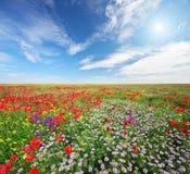 Цветки весны в луге Стоковые Изображения