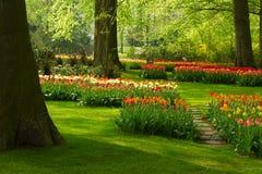 Цветки весны в парке Голландии стоковые фотографии rf