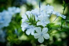 Цветки весны в парке стоковые изображения rf