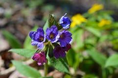 Цветки весны в парке Стоковая Фотография