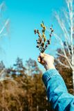 цветки весны в руке женщины стоковые фотографии rf