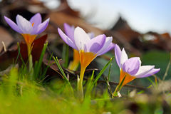 Цветки весны в солнце стоковые фото