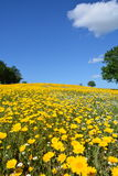 Цветки весны в Турции Стоковое Фото