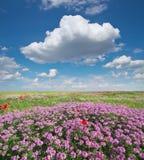 Цветки весны в луге Стоковое Изображение RF