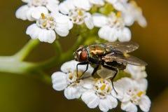 Цветки весны летают Стоковое Изображение RF