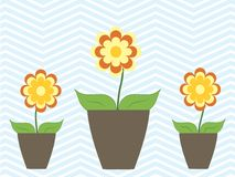 Цветки весны лета красочные в доме бака уютном Стоковые Изображения RF