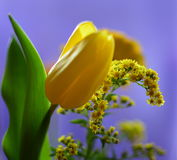 Цветки весны желтые стоковая фотография rf