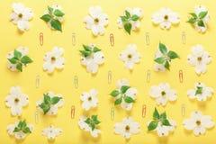Цветки весны и бумажные зажимы на желтой предпосылке Стоковая Фотография RF