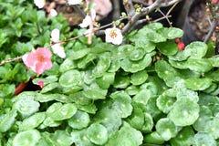Цветки весны красивые в воскресенье Стоковые Фотографии RF