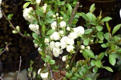 Цветки весны красивые в воскресенье Стоковые Изображения RF