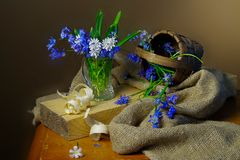 Цветки весны красивые изолированные на коричневой предпосылке Стоковая Фотография RF
