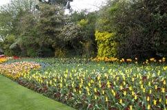 Цветки весны Лондона парка St James стоковая фотография
