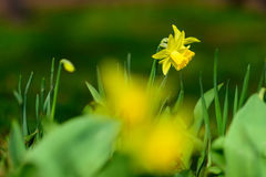 Цветки весны на предпосылке записанной нежностью Стоковые Изображения RF