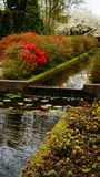 Цветки весны: пруд воды окруженный красочными кустами Стоковые Изображения RF