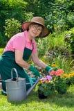Цветки весны счастливой дамы трансплантируя Стоковая Фотография RF