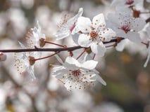 Цветки весны с голубой предпосылкой Стоковая Фотография