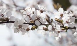 Цветки весны с голубой предпосылкой Стоковые Изображения RF