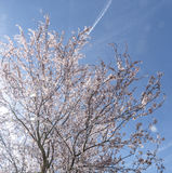 Цветки весны с голубой предпосылкой Стоковые Фотографии RF