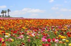 Цветки весны холма верхние Стоковое Изображение