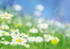 Цветки весны Стоковое Изображение