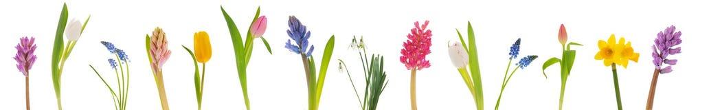 Цветки весны Стоковая Фотография RF