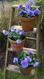 Цветки весны Стоковые Фото
