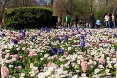 Цветки весны Стоковое фото RF