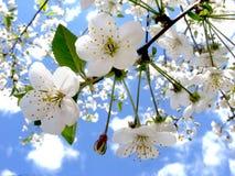Цветки весны Стоковые Фотографии RF
