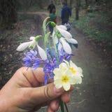 Цветки весны Beutifull стоковая фотография rf