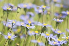 Цветки весны Bue стоковое изображение rf