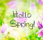 Цветки ветреницы весны стоковые изображения rf