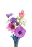 цветки ветреницы Стоковое Изображение RF