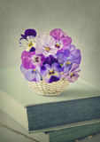 Цветки Виолы Стоковое Изображение RF