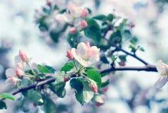 Цветки вишневых цветов на весенний день Стоковая Фотография RF
