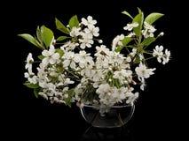 Цветки вишни в стеклянной вазе Стоковые Изображения