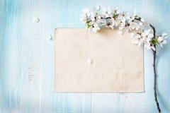 Цветки вишни на деревянной доске Стоковое Изображение RF