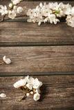 Цветки вишни на деревянной доске Стоковое фото RF