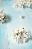 Цветки вишни на деревянной доске Стоковое Фото
