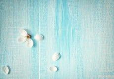 Цветки вишни на деревянной доске Стоковые Фото