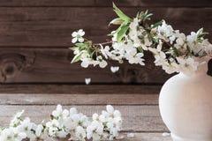 Цветки вишни на деревянной предпосылке Стоковые Изображения