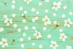 Цветки вишни на старой голубой доске Стоковые Изображения