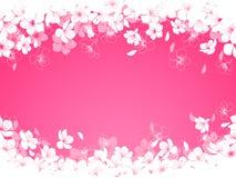 Цветки вишни Стоковые Фотографии RF