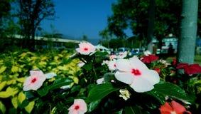 Цветки внешние Стоковое Фото