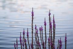 Цветки водой стоковые фотографии rf